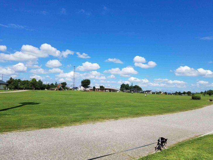 【埼玉】松伏町の公園では愛犬と一緒に芝生を自由に走れる!