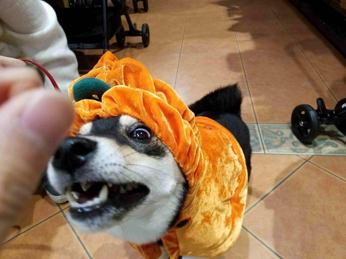 hime-halloween03