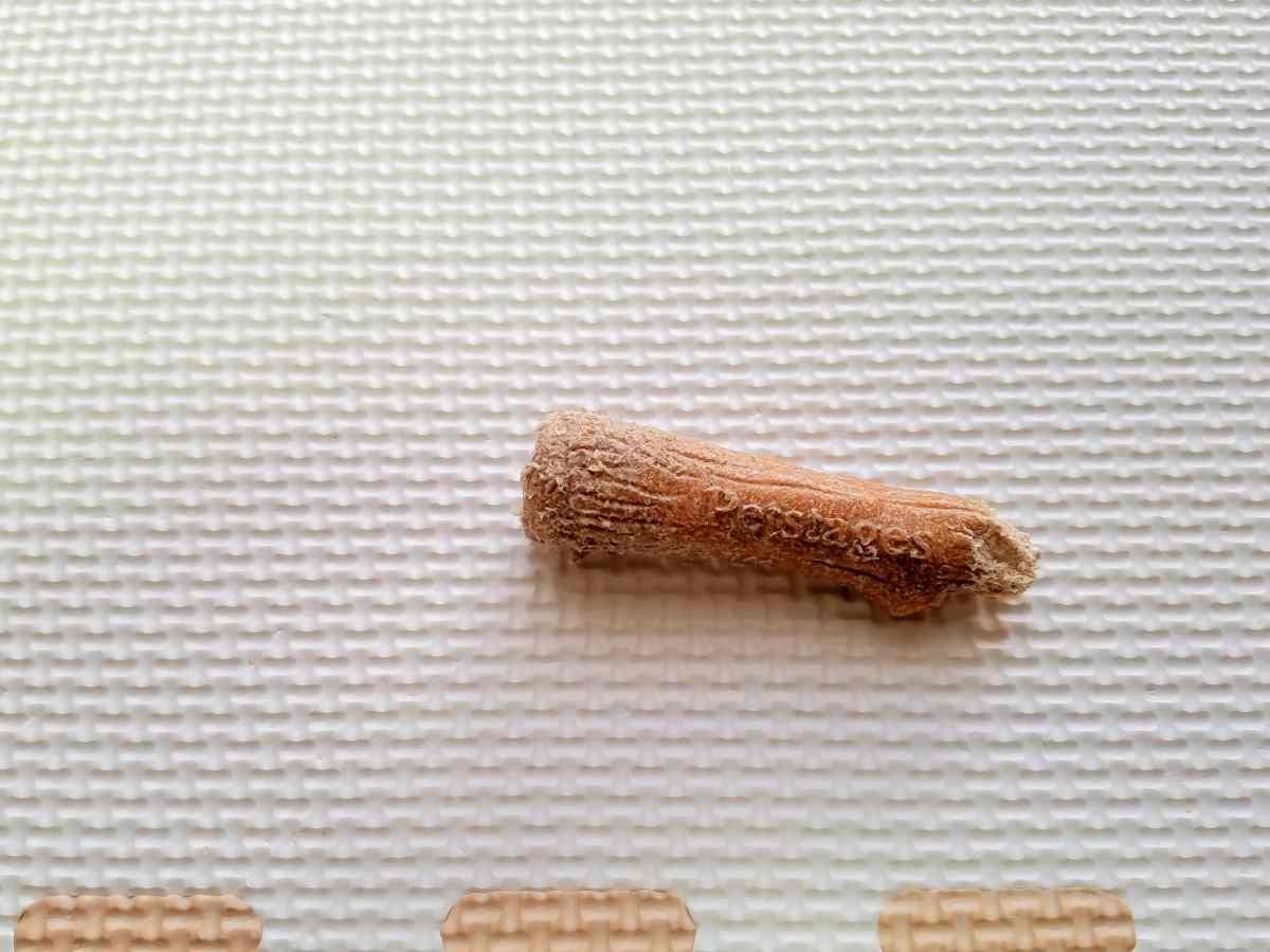 短くなった木の棒