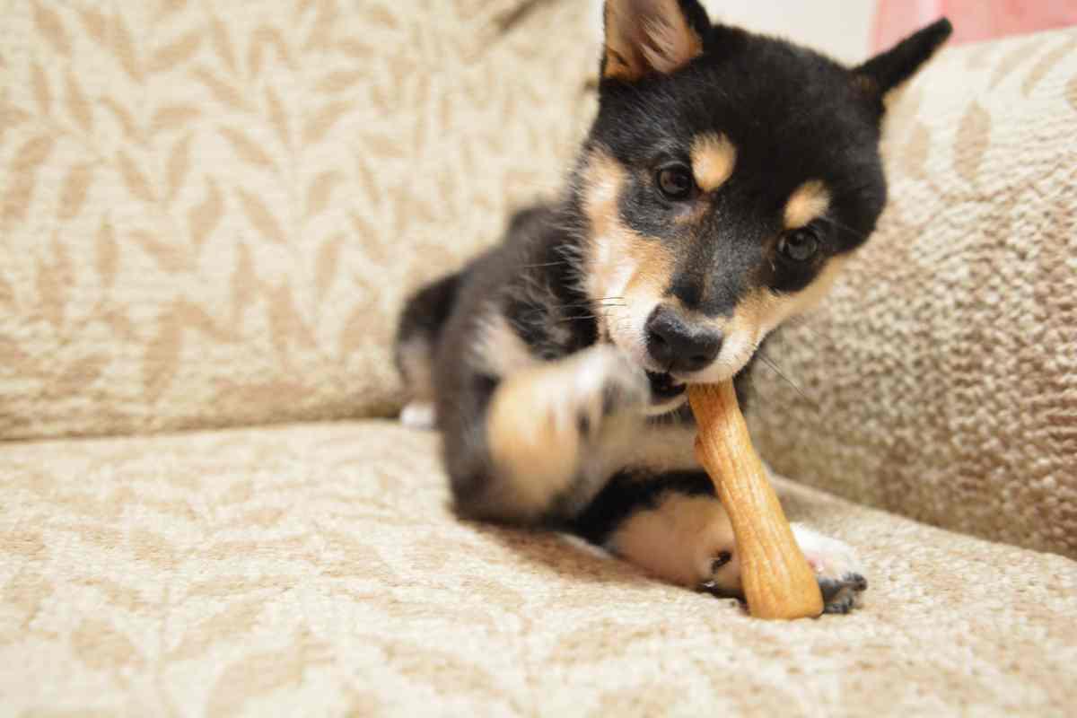 犬(ひめ)が木の棒をかじっている