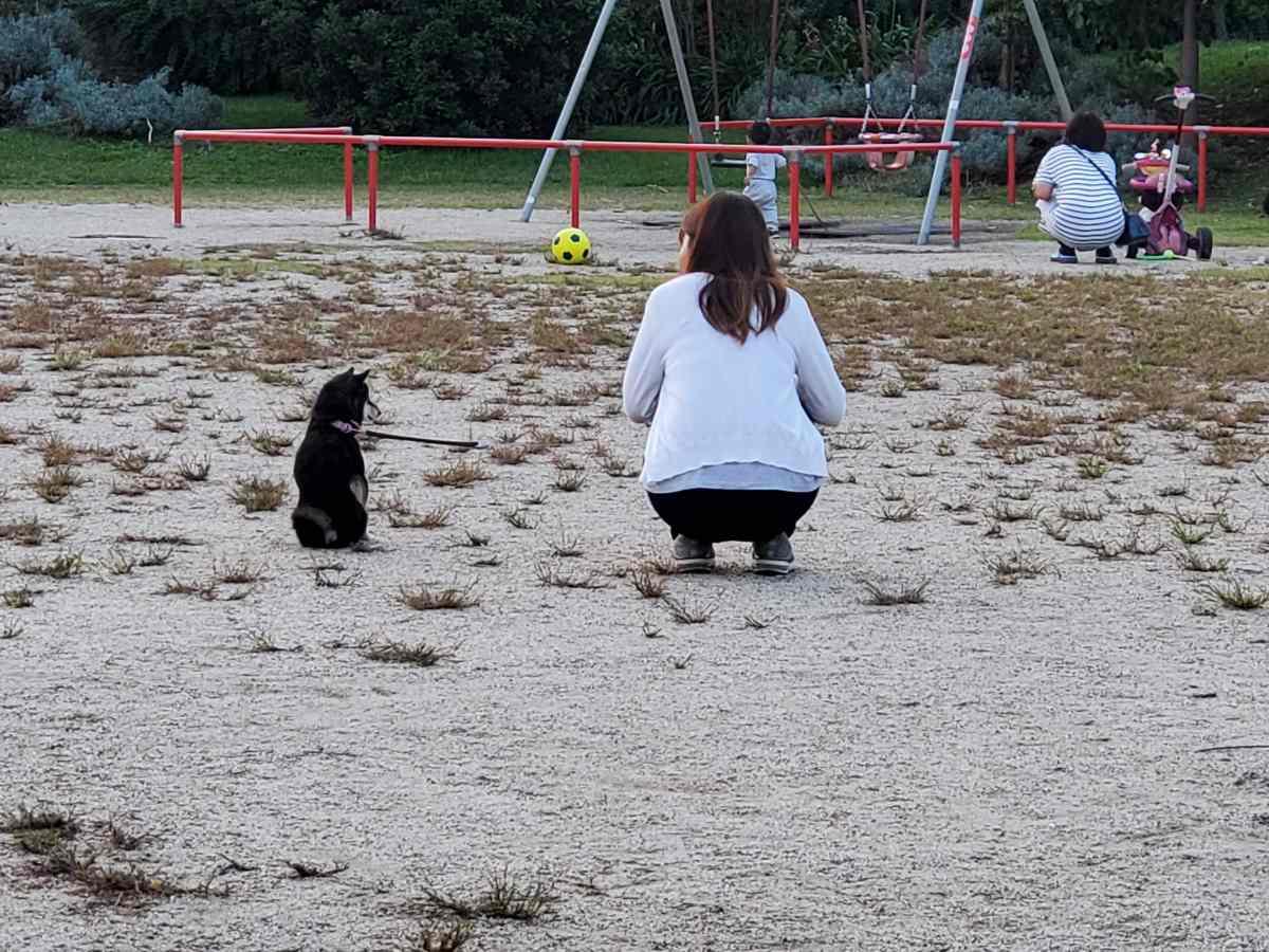 犬(うみ)と妻が二人で背中を見せている