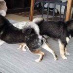 2匹の犬が背伸びをしている
