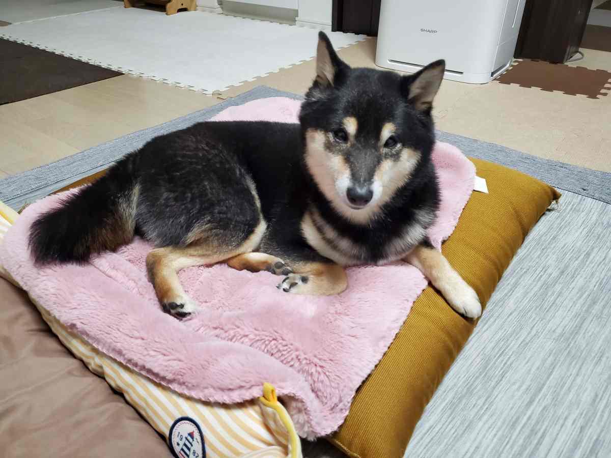 犬(うみ)