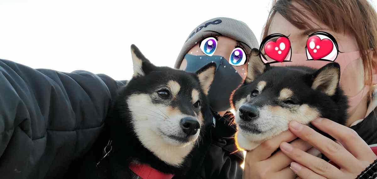 犬2匹と僕とママ
