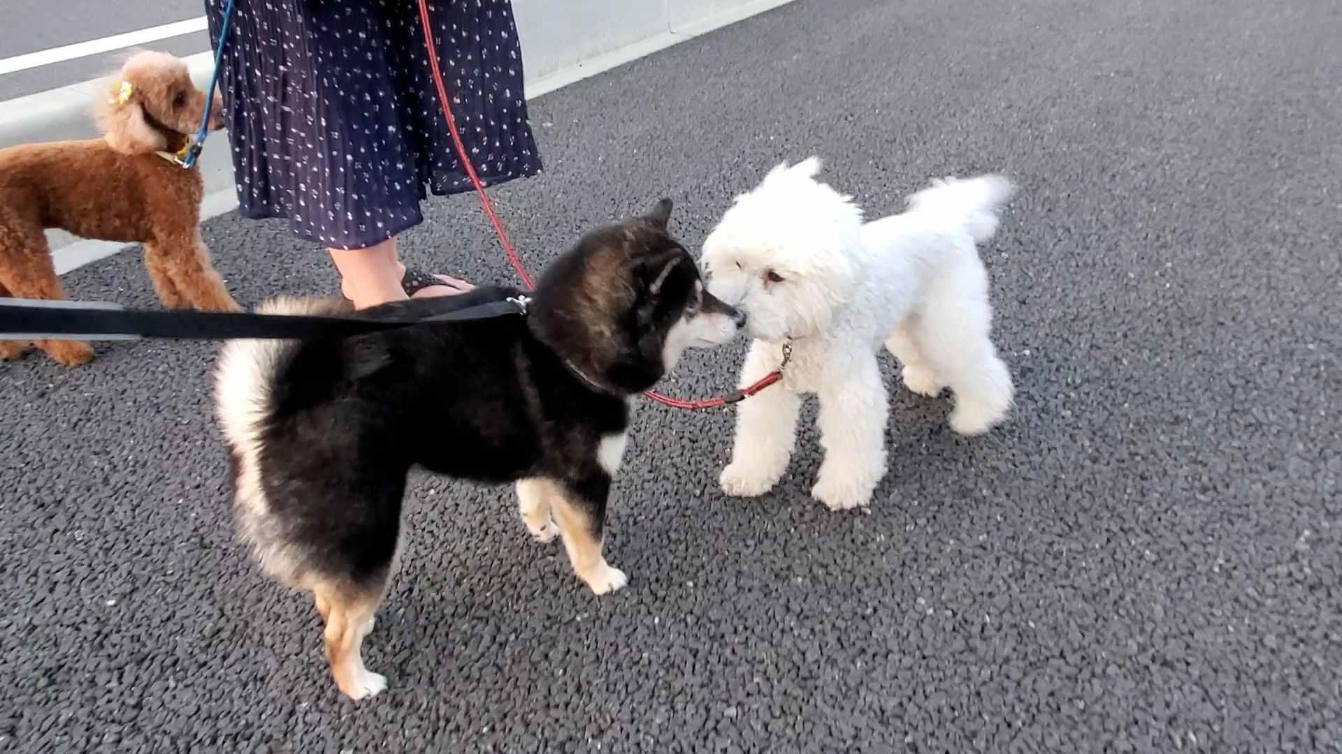 白い犬と黒い犬が鼻をくっつけている