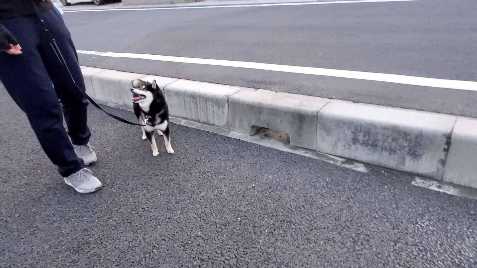 完全に抱っこアピールしている犬(うみ)