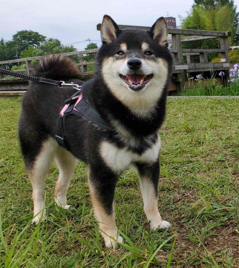 笑顔の犬(うみ)