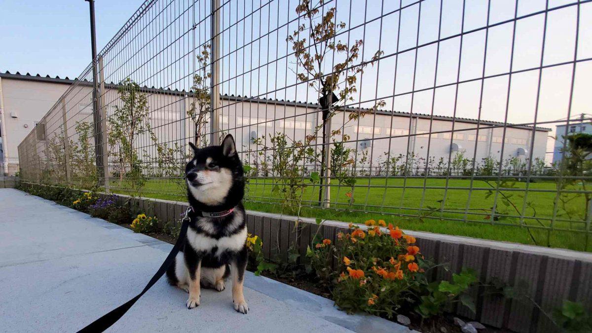 お花のそばに座っている犬(うみ)