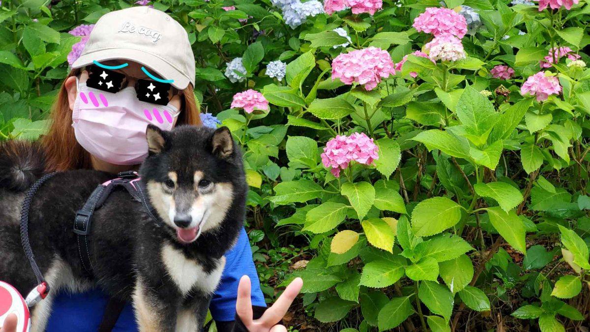 あじさいを背景に記念撮影している人と犬